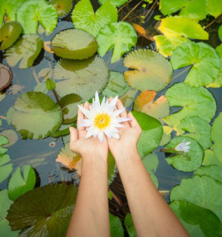 two hands holding lotus